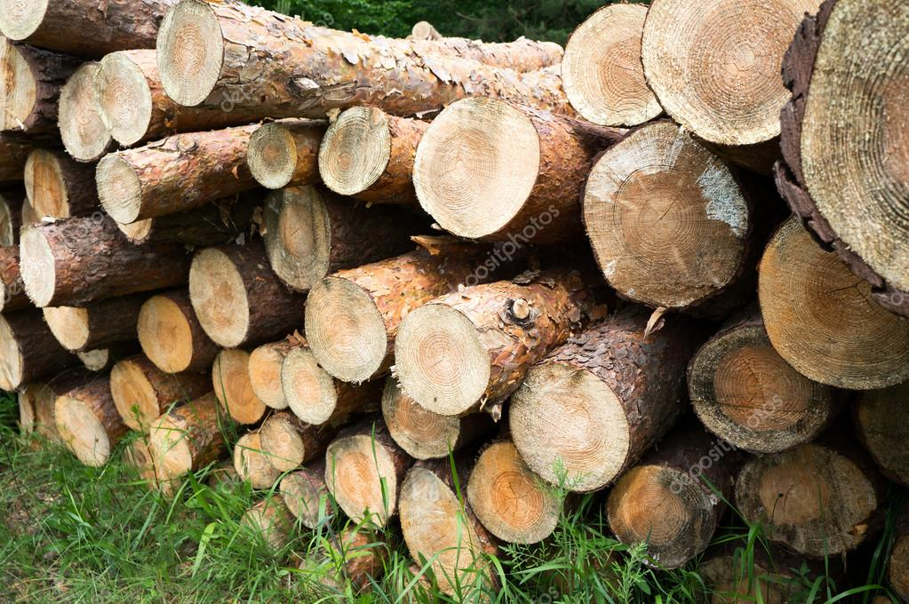 Freshly chopped tree logs stacked up on top of each other in a pile.