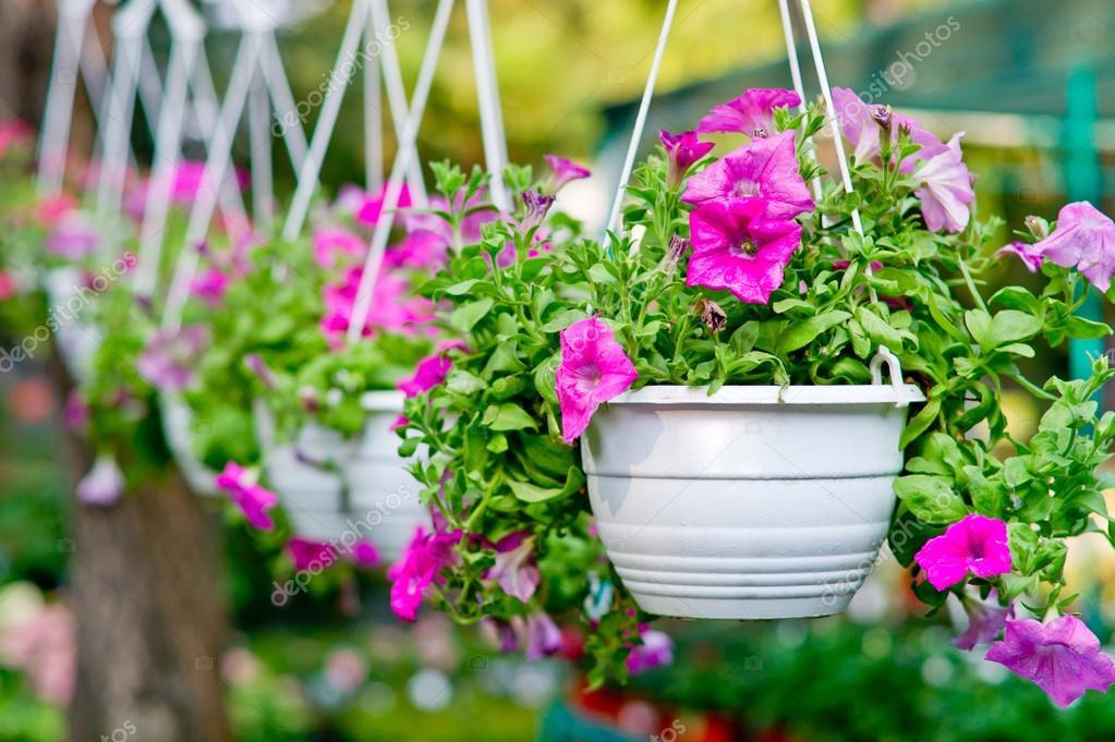 flores en macetas colgantes fotos de stock 14394385