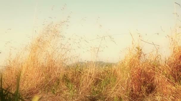 shaked, a szél mező széna lapátok