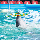 Photo Dolphin in the dolphinarium pool