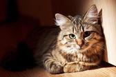 Fotografie pěkná kočka
