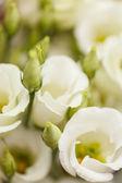 Fotografie bílé květy