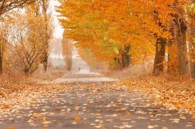 Autumn alley stock vector