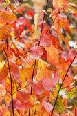 Fotografie Autumn leaves