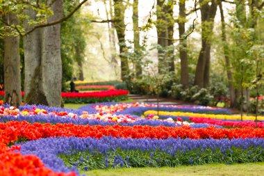 Spring garden stock vector