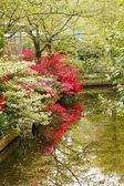 Fotografie Japonská zahrada