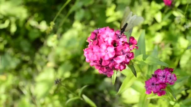 motýl na květiny