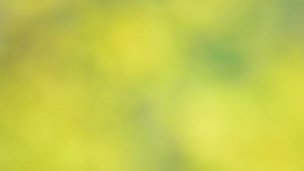 verdi cespugli di foglie