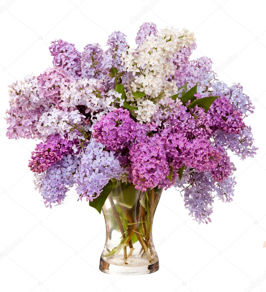 lilacs in a glass vase stock photo timmary 27421967. Black Bedroom Furniture Sets. Home Design Ideas