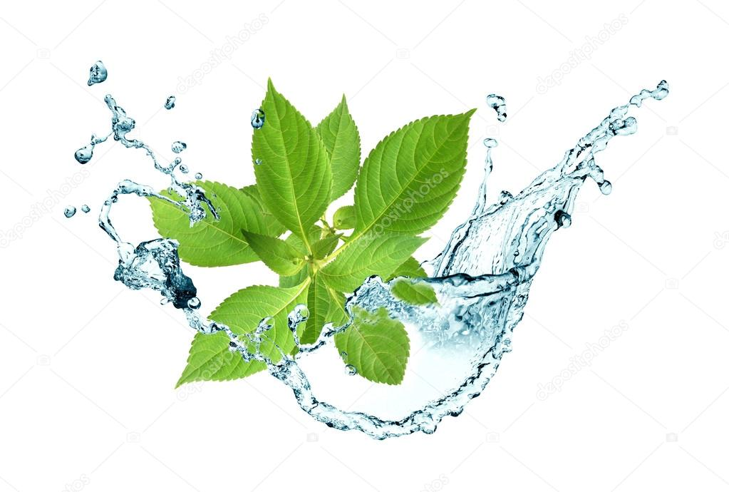 Leaves In Water