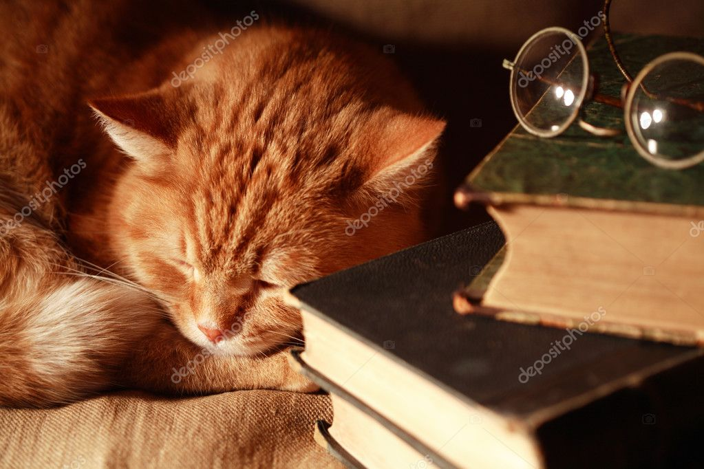 Кот спящий в книгах