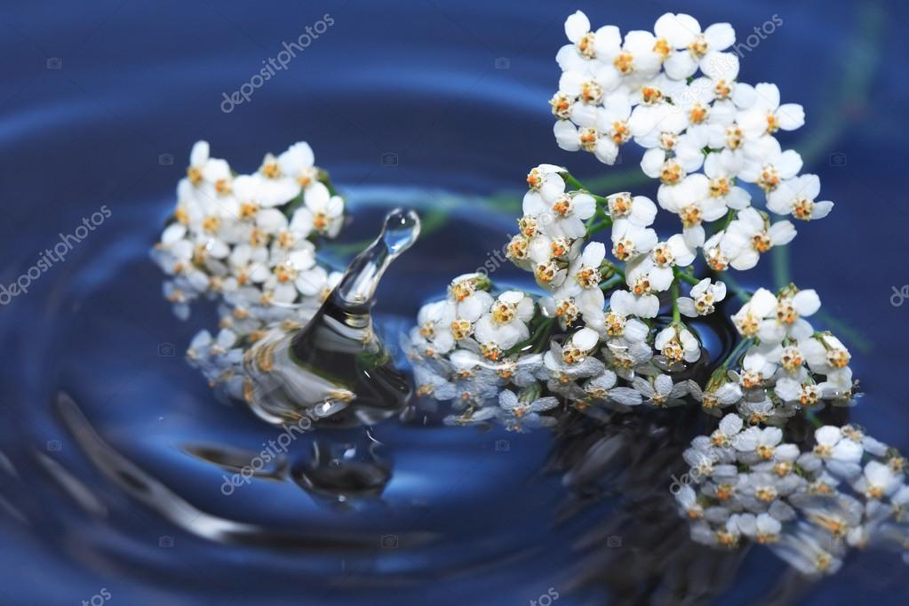 Flowers Above Water