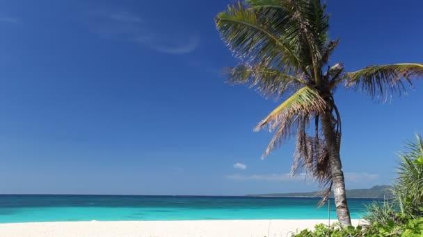 Palm trópusi tengerparton