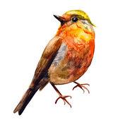 Aranyos madarak, a design. akvarell