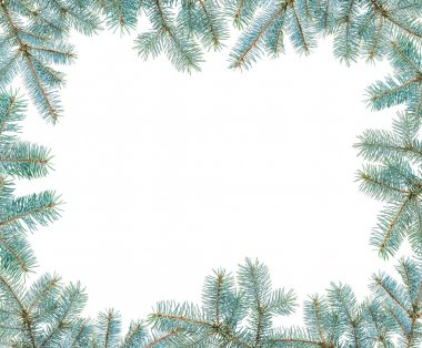 Frame made with blue spruce twigs isolated on white, copyspaced