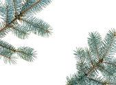 Karácsonyi fenyő ágak keret, elszigetelt fehér