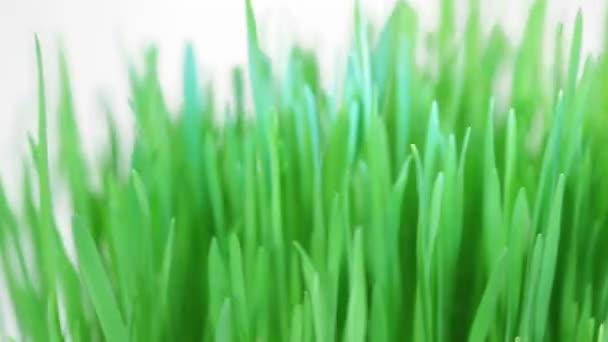 rotující čerstvé nové zelené trávě parta 3 x sada