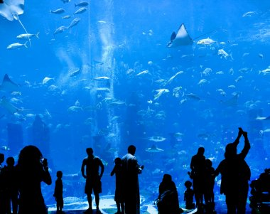 Silhouettes of against a big aquarium