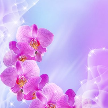 Orchid and stars