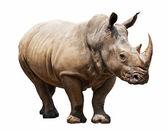 Photo rhino on white background