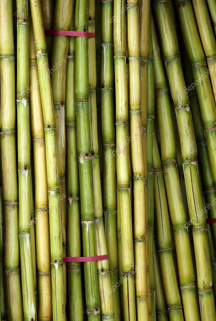 Bundles of Fresh Sugar Cane