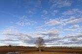 Tree in field.