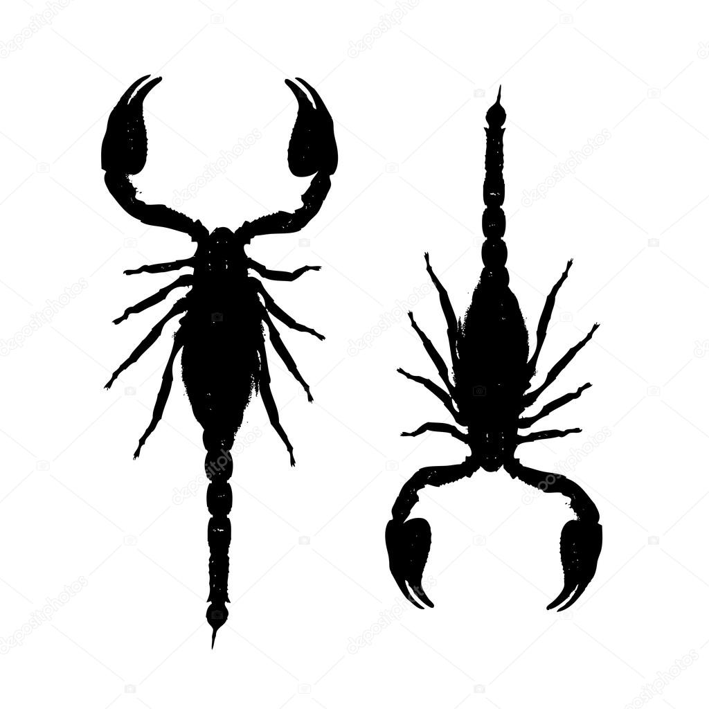 Scorpions, black silhouette for your design