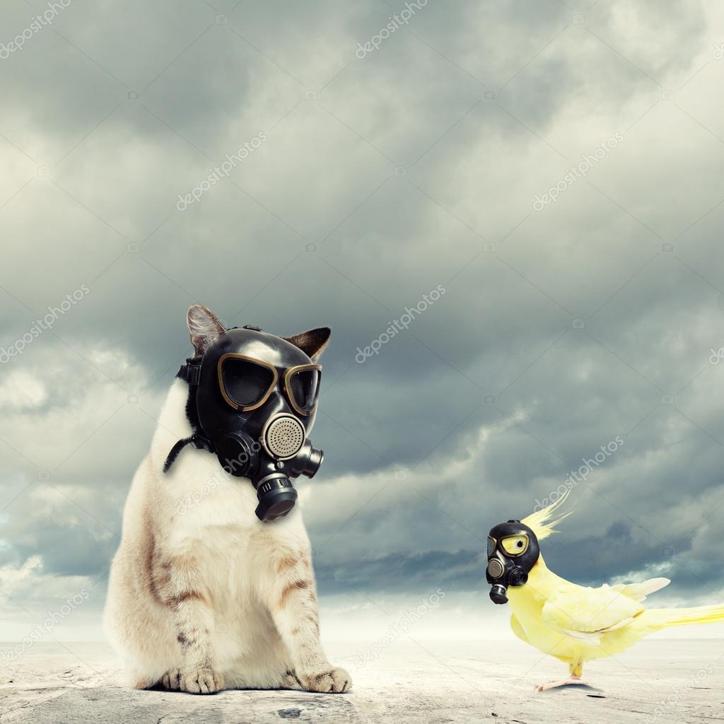 nouvelles promotions coupon de réduction grossiste Chat et perroquet en masques à gaz — Photographie ...