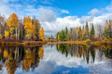 Nice autumn landscape with forest lake