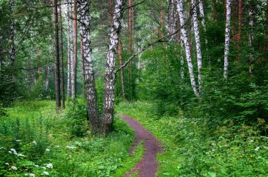 Beautiful Siberian forest