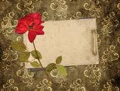 Régi kártyák és száraz rose