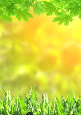 Summer green grass and maple leaves