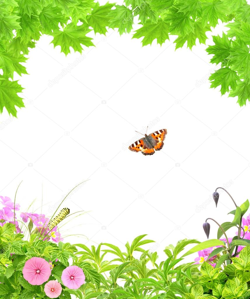 Summer frame with green maple leaves, flowers and insects