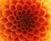 abstrakte Blütenblätter