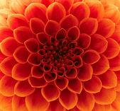 abstraktní květy