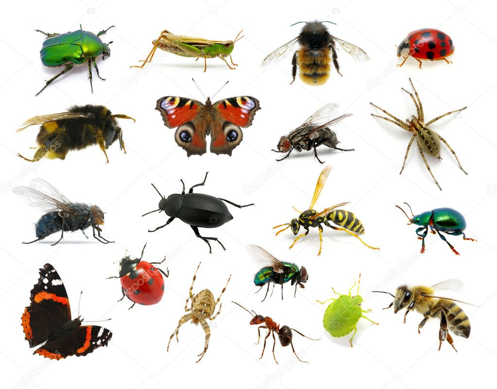 insectos #hashtag