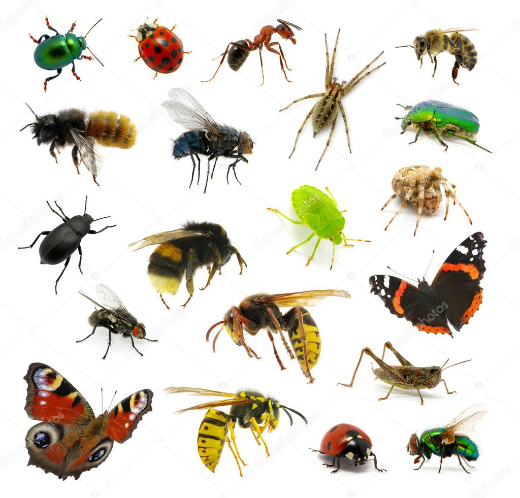 Insectes images libres de droit, photos de Insectes | Depositphotos