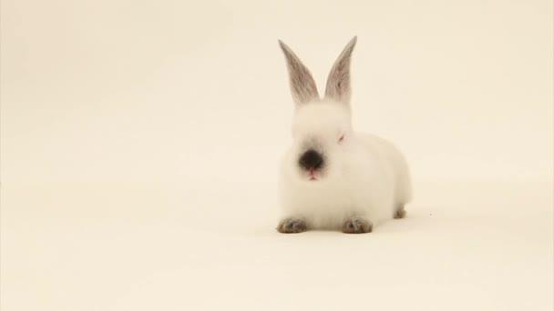 roztomilý králík