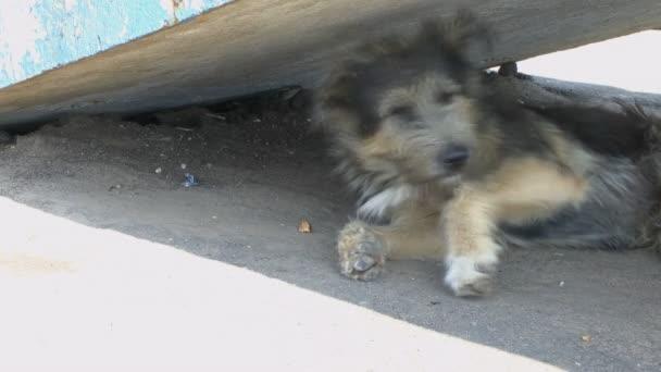 Egy kóbor kutya