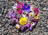 Květina na kámen