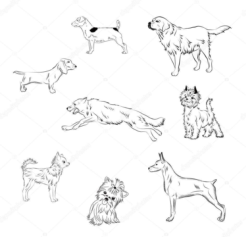Pies Czarno Bialy Grafika Bialy Maly Piesek Rasa Rasy Psow Czarno Biale Stockowe Wektory I Ilustracje Depositphotos