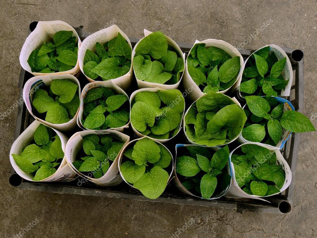 seedlings transportation