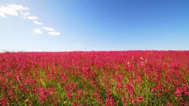 piros Virág Meadow