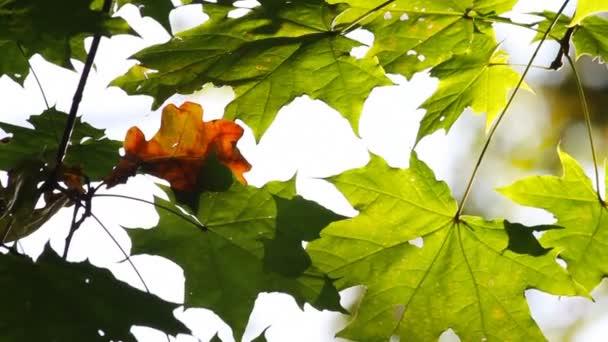 podzimní listí na větvi