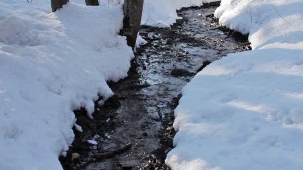 lesní potok, zima