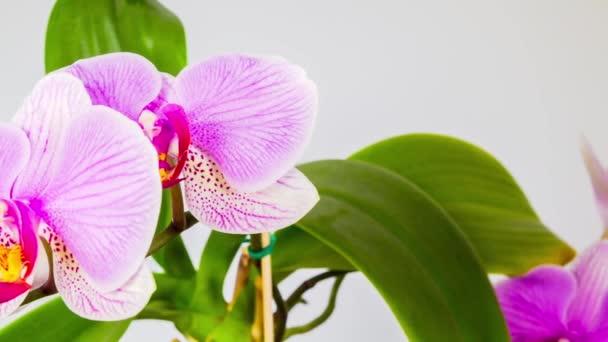 květy orchidejí