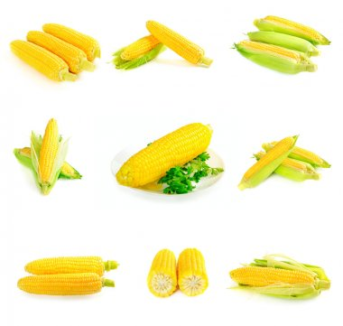 Corn cobs set