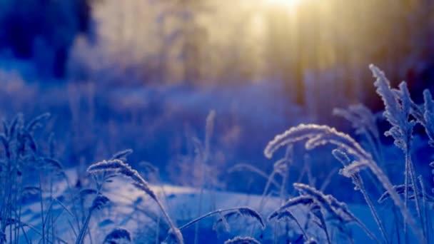 Winter-scen