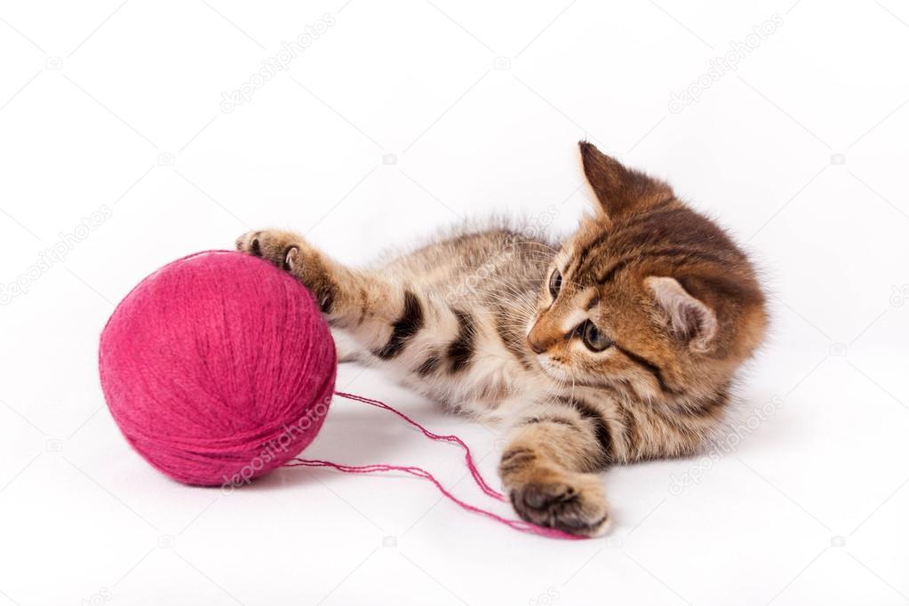 小猫玩球图片_平纹小猫玩一个毛线球 — 图库照片©Natalia7#34742427