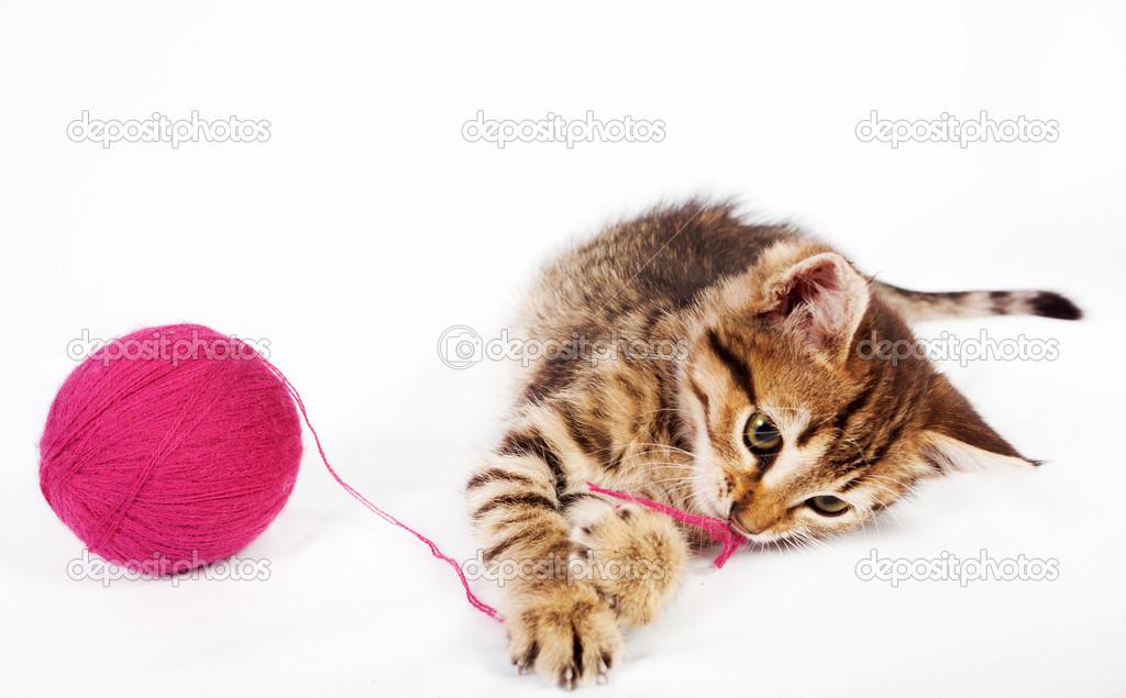 小猫玩球图片_平纹小猫玩一个毛线球 — 图库照片©Natalia7#51193865